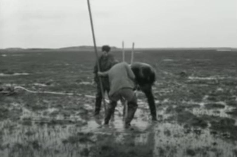 IRO 50 jaar: Wist je dat…Waddenzee
