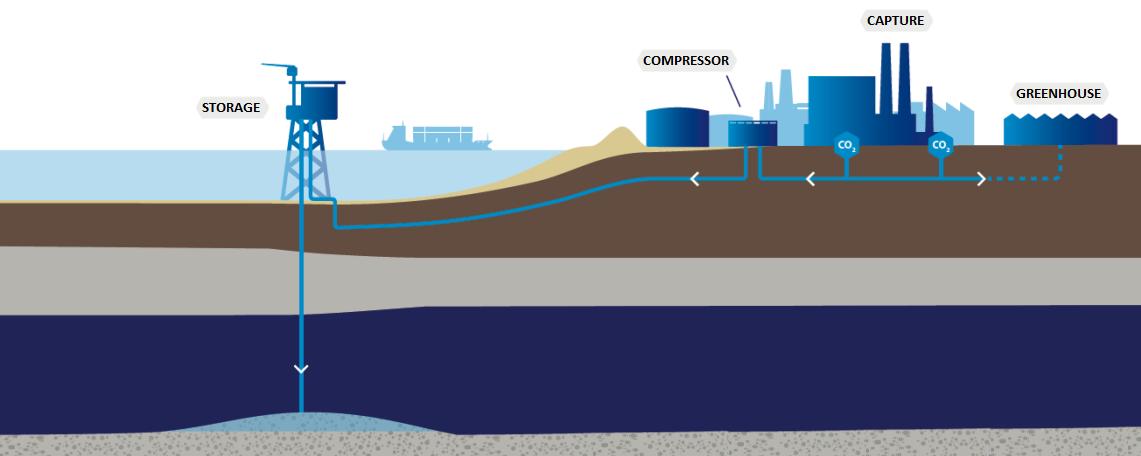 Offshore Pipeline Design for CCUS